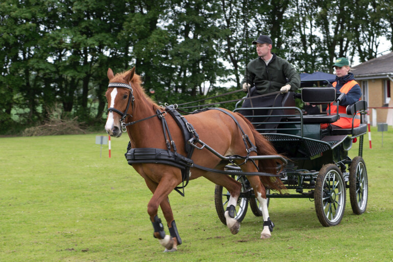 Hestevogns race, kan man det?